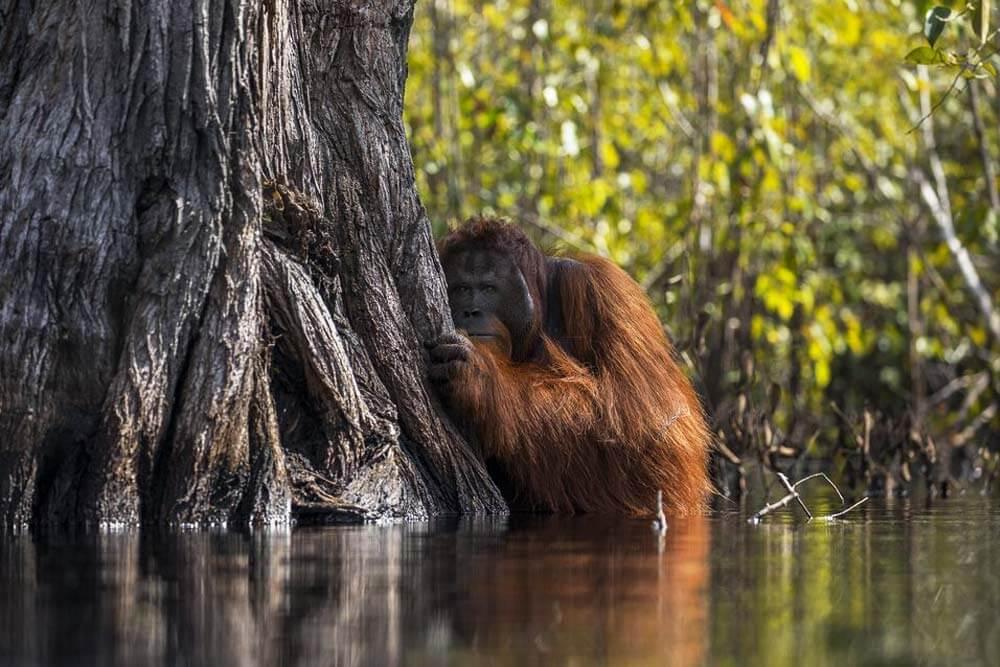 Fotografía de Jayaprakash Joghee, ganadora de National Geographic 2017