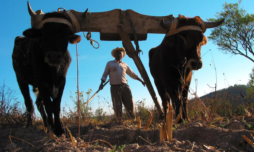CEDICAM fue creado con el objetivo de trabajar las tierras para sembrar árboles y lograr la producción de alimentos.